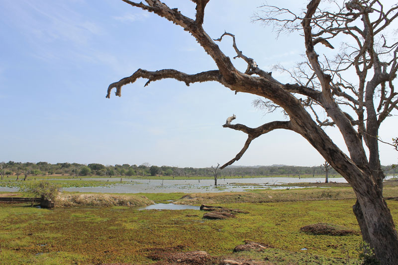 Parc National de Yala